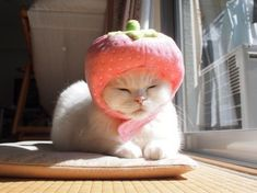 strawberry head- why is this so funny to me. Cute Little Animals, Cute Funny Animals, Funny Cats, I Love Cats, Crazy Cats, Cool Cats, Animals And Pets, Baby Animals, Cat Dog