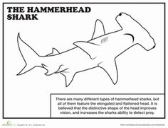 hammerhead shark colouring page for kids Pinterest