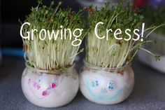 The Imagination Tree: Growing Cress Heads and Cress Initials!