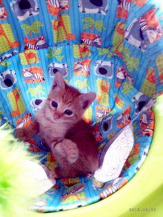 Se cree un bebecito! #gatitos