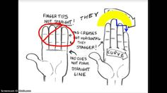 Drawing hands. A tutorial to help students understand the basic breakdown of drawing hands.