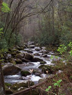 smoky mountains, TN