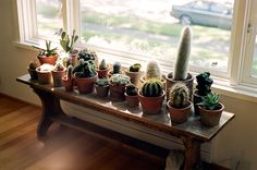 cactus garden via Miss Moss : Rodney Graham by Jennilee Marigomen Decor, Cool Plants, Plant Table, Indoor Cactus, Indoor Gardens, Cacti And Succulents, Indoor Plant Lights, Plant Lighting, Indoor Window