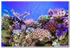 The facts about coral reefs. Coral reefs are definitely one of the most gorgeous natural wonders on earth. The coral reefs should be more than a tour..