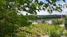 Maison à vendre - 7 pièces - 198 m2 - DOLE - 39 - FRANCHE-COMTE Vineyard, Outdoor, Vine Yard, Outdoors, Outdoor Games