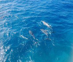 Rio de Janeiro  Dolphins are wonderful animals