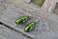 Floating Real Stag Beetle Earrings Green & Rust Moonrise Kingdom Movie. $26.00, via Etsy.