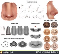 Check out and Download the Nose ReferenceHEREArtist:Tim Von Rueden (vonn) This facial reference resource gives some tips and step by step visual guides on how to draw and shade the nose.