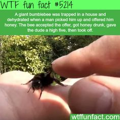 Man gets a high five from a bee he saved - WTF fun facts