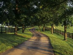 Tree-Lined Winding Road and Fences at First Light Between Pastures, Kentucky, USA.