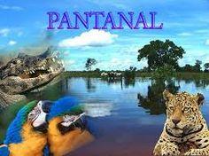 Résultats de recherche d'images pour «pantanal»