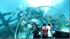 World's largest oceanarium opens in Singapore