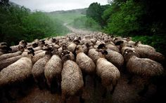"""""""Sheep River"""", taken in the Bieszczady, Poland - by Maciej Grzegorzek, Poland / Sony World Photography Awards: the best travel images"""