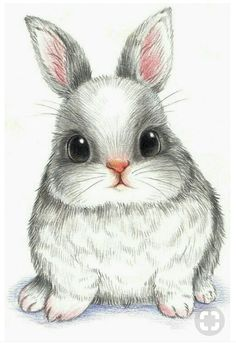萌 兔 彩 铅 conejos bunny drawing, rabbit drawing и draw Cute Drawings, Animal Drawings, Drawing Sketches, Pencil Drawings, Drawings Of Cats, Realistic Drawings, Colorful Drawings, Animal Paintings, Bunny Drawing
