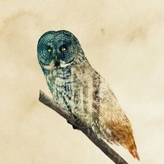 double exposure animal photography andreas lie 22 880