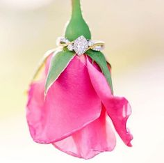 21 Creative Engagement Ring Photo Ideas: Unique vintage diamond and gold engagement ring on pink rose {Tara Libby Photography}