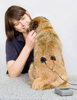 Veterinary physiotherapy for dogs includes many techniques other than massage