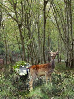 Tapada de Mafra Mein Land, Iberian Peninsula, Visit Portugal, Portuguese, Wildlife, Country, Green, Travel, Animals