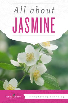 Transform your daily rituals with the sweet, floral aroma of Jasmine!