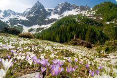 Una gita alla scoperta delle Orobie, escursioni tra natura e benessere: Rifugio Passo San Marco. Italy, Mountains, Garden, Plants, Travel, Beautiful, Landscaping, Natural, Faces