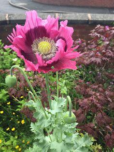 45 Best Flower Garden Zone 10b Images