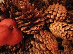 The smell of cinnamon pine cones or apple and cinnamon candles...