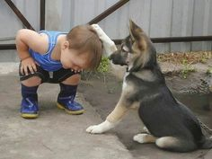 Knights of the Roundtable of Companionship - Funny pictures and memes of dogs doing and implying things. If you thought you couldn't possible love dogs anymore, this might prove you wrong. Funny Animal Pictures, Dog Pictures, Funny Photos, Funny Animals, Cute Animals, School Pictures, Random Pictures, Love My Dog, Puppy Love