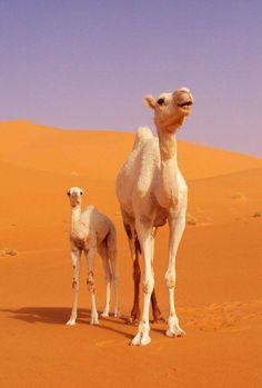 New Born Of The Desert <3