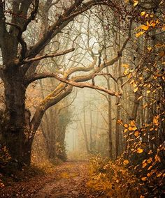 Path into the mist (no location given) by Oer-Wout