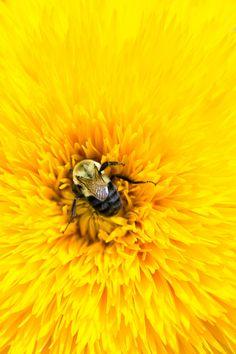 bee + flower