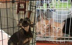 """""""O GRITO DO BICHO"""": Nova Lei regula criação e venda de cães e gatos em..."""