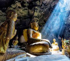 "Lonely Planet says ""endless beaches, timeless ruins, oodles of elephants and flavorful food make Sri Lanka irresistible,"" and this weeklong adventure. Sri Lanka, Nature Architecture, Safari, Terracotta Army, Shwedagon Pagoda, Fushimi Inari Taisha, Zen, Luang Prabang, National Treasure"