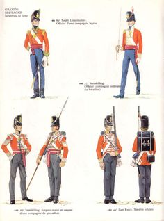 1815 ca.   Soldiers, Sergeants, and Officers, Line Infantry, British.        suzilove.com