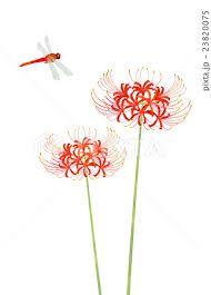 彼岸花에 대한 이미지 검색결과