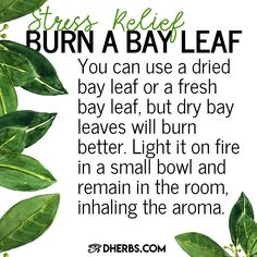 Try this simple herbal remedy to relieve stress and let us know if it worked out for you. You should also keep extra bay leaves around so you can cook with them and reap their health benefits through your diet.
