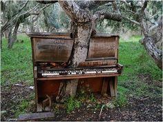 Дерево проросшее в старом фортепиано, Калифорния.jpg