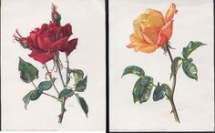"2 ROSE LITHOGRAPHS IN 1 LOT  1) RED ROSE  2) YELLOW-ORANGE COLOR  7"" X 9"" CHEER UP ANY ROOM Cheer Up, Red Roses, Orange Color, Art Work, Yellow, Plants, Room, Artwork, Work Of Art"