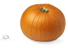 Poppyseed to pumpkin: how big is your baby?