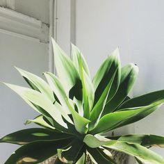 embracing that sydney sun  @maisonpetale #green #nature #plant
