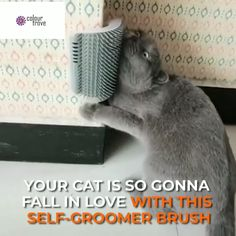 Cat Self Groomer Brush ? Cat Self Groomer Brush ? The Cat Self Groomer Brush provides easy-access rubbing pleasure for cats, while the bristles simultaneously remove loose and shedding hair. The brush can be snapped in and out of its… Continue reading → Animals And Pets, Funny Animals, Cute Animals, Crazy Cat Lady, Crazy Cats, Chat Kawaii, Gatos Cats, Cat Room, Cat Furniture