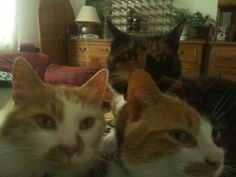 Group shot! (Spike, Bella and Sushi)