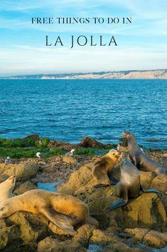 500 Best La Jolla Images In 2020 La Jolla San Diego Travel La Jolla California