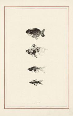 Scientific Illustration: Photo  Camper diagram - hierarchy