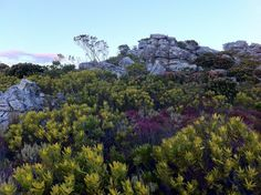D. Kevin Sherman :  This evening's hike... Cold Spring day... Ready for warmer weather.   [near Muizenberg, Western Cape, South Africa]