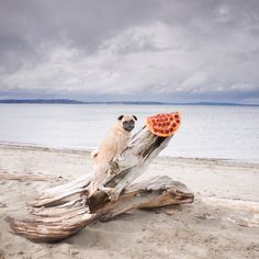 #Photography, #Pizza, #World