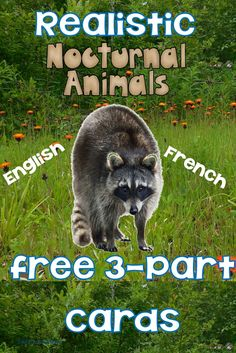 Free Realistic Nocturnal Animal Cards in English and in French Diurnal Animals, Nocturnal Animals, Summer Camp Activities, Work Activities, Sensory Activities, Preschool Printables, Free Printables, Preschool Ideas, Animal Activities