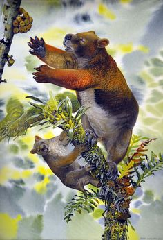 """Nimbadon by Peter Schouten """"The long-extinct Nimbadon was the largest arboreal marsupial herbivore ever to have lived and it was well suited to life in the treetops"""" Keep reading at UNSW"""
