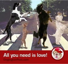 """""""Love is all you need""""! ♥♥♥ https://www.facebook.com/DogingtonPost"""