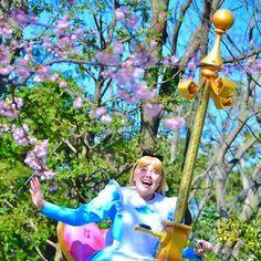【keicue】さんのInstagramをピンしています。 《Can't wait spring!🌸 Bitter and sweet season...😢😊 #桜 #さくら #sakura #happinessishere #alice #facecharacter #tokyodisney #tokyodisneyland #TDL #sakurabound #ハピネスイズヒア》