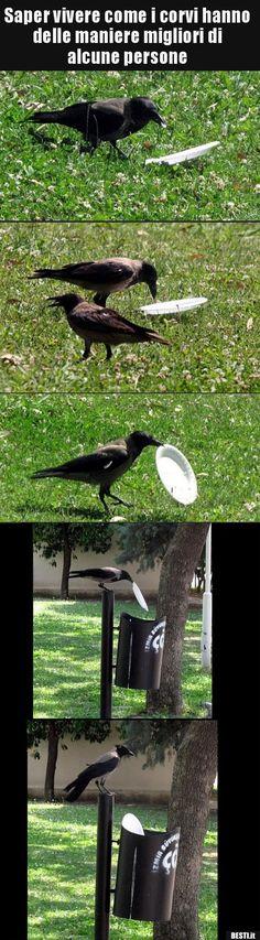 Saper vivere come i corvi hanno delle maniere migliori di.. | BESTI.it - immagini divertenti, foto, barzellette, video